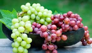 ۱۳ هزار تن انگور در جوین تولید شد