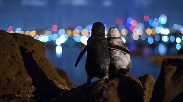 جایزه عکس سال: پنگوئنهایی که یکدیگر را تسلی میدهند
