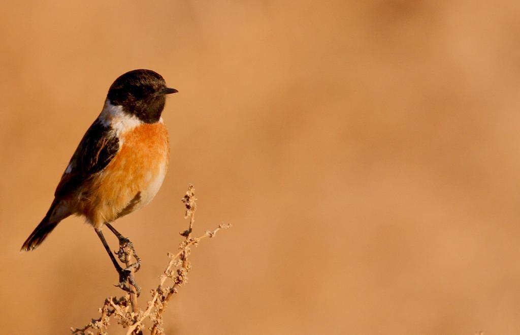 مشاهده پرنده جدید در خراسان جنوبی