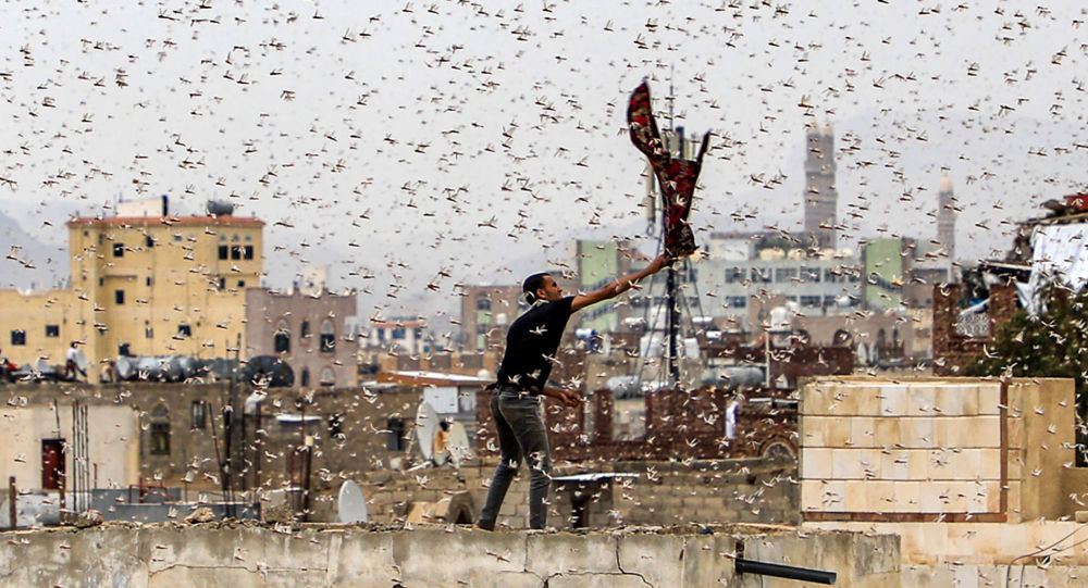هجوم گسترده ملخ های صحرایی در ۱۵ روز آینده به ایران