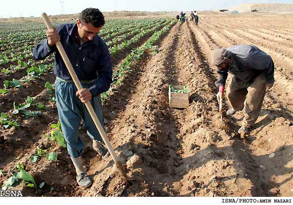 بخش کشاورزی و ۳۰ درصد صادرات غیرنفتی خراسان رضوی