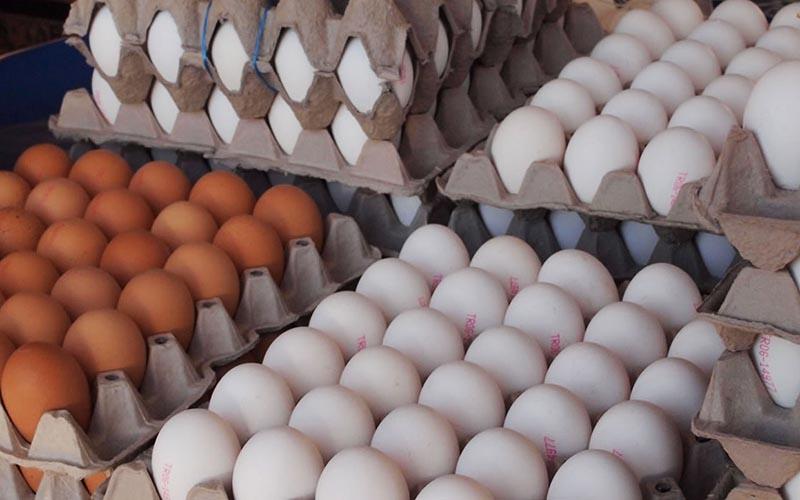 چشمک تخم مرغ به شانه ای ۳۰هزار تومان