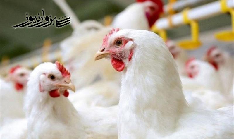 پیش بینی عضو اتاق بازرگانی ایران از قیمت مرغ طی ماه های آینده!