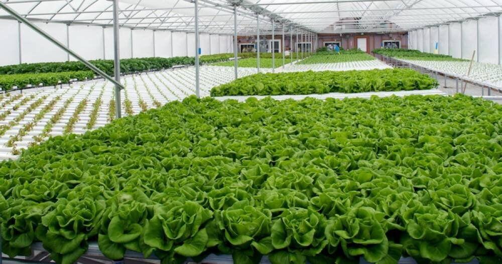 پرداخت 100 میلیارد ریال تسهیلات ساخت گلخانه در سبزوار