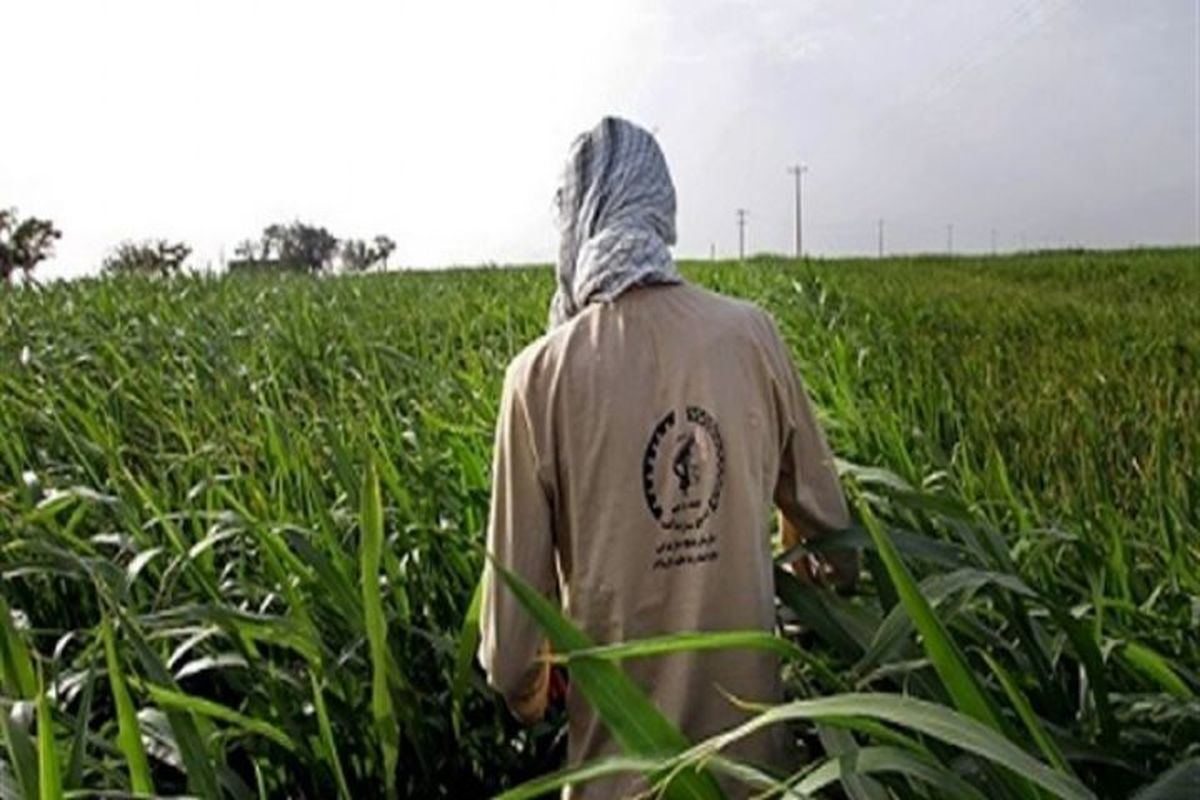 فعالیت نخستین مرکز خدمات کشاورزی غیردولتی در جوین