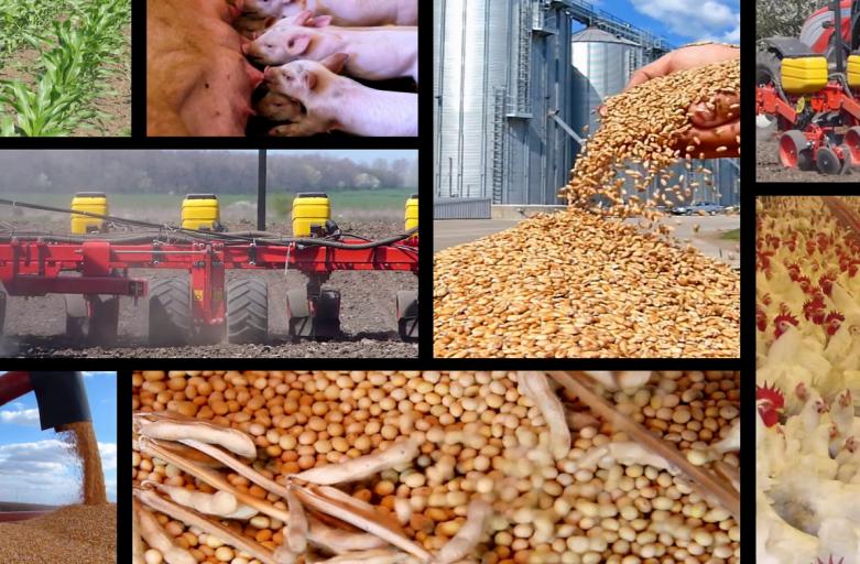 دولت، ۹۰۰ روز پیش فاتحه «صنعت تولید پروتئین» را در کشور خواند