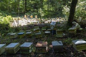 کلونیهای تولید عسل در سبزوار ۲ برابر شد