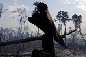 دو سوم از جنگل های استواییِ جهان تخریب شد