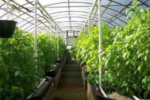 افزایش سطح زیرکشت گلخانههای سبزوار
