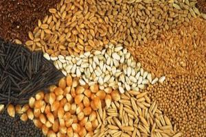 افزایش قیمت خوراک دام در بازارهای جهانی