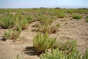 بیابان زدایی 250 هکتار عرصه طبیعی در سبزوار