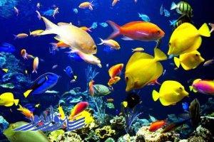 تولید یک میلیون و ۲۰ هزار قطعه ماهی زینتی در ۲۰ واحد پرورش شهرستان