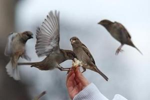 به پرندگان غذا بدهید اما با احتیاط