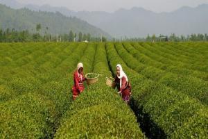 1900 شغل در روستاهای سبزوار ایجاد شد