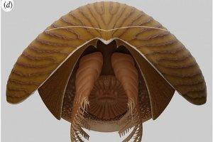 کشف جانور اقیانوسی از 500 میلیون سال پیش