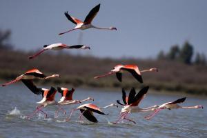 13 واقعیت شگفتانگیز درباره مهاجرت پرندگان