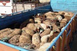 قاچاق دام زنده و افزایش قیمت گوشت قرمز