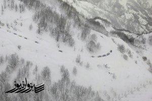 آخرین آمار تلفات و جزئیات ریزش بهمن را در ارتفاعات تهران ارائه داد