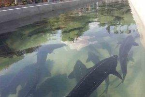 تولید یکهزار و ۴۰۰ تن ماهی در سبزوار