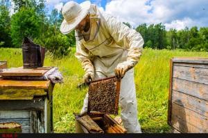 تولید 50 تن عسل طبیعی در سبزوار