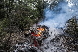 جنگل شهرستان نکا در مازندران آتش گرفت