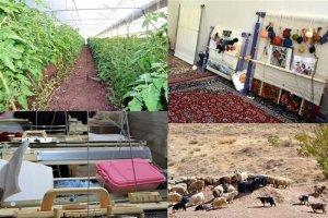 روستایی که با ۱۰ میلیون تومان از بیکاری نجات یافت