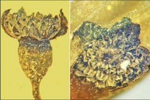 کشف گلی کوچک با عمر حدود ۱۰۰ میلیون سال