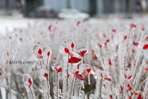 باران یخ در ولادی واستوک روسیه