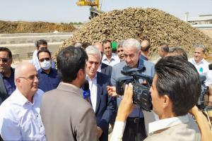 کشت پاییزه چغندرقند اولویت وزارت کشاورزی در خودکفایی شکر است