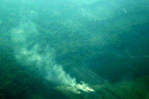 آتشسوزی جنگل رامسر مهار شد