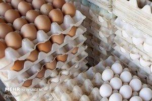 تخم مرغهای فلهای بهداشتی هستند