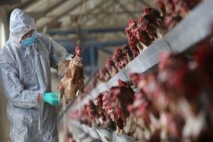 کنترل آنفلوانزای پرندگان در خراسان جنوبی