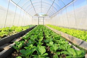 افزایش چهاربرابری کشت گلخانهای در سبزوار