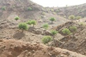 تشکیل 220 پرونده تخلف در عرصههای منابع طبیعی سبزوار
