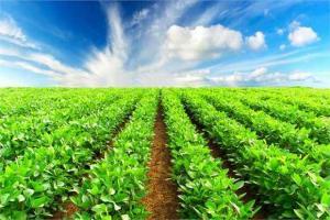 بیمه شدن 1300 کارگر بخش کشاورزی در سبزوار و جغتای