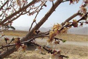 خسارت 95 درصدی خشکسالی به باغات شهرستان جغتای