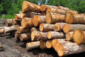 قاچاق چوب کاهش یافته است