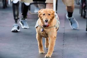 شناسایی افراد آلوده به کرونا توسط سگ های پلیس